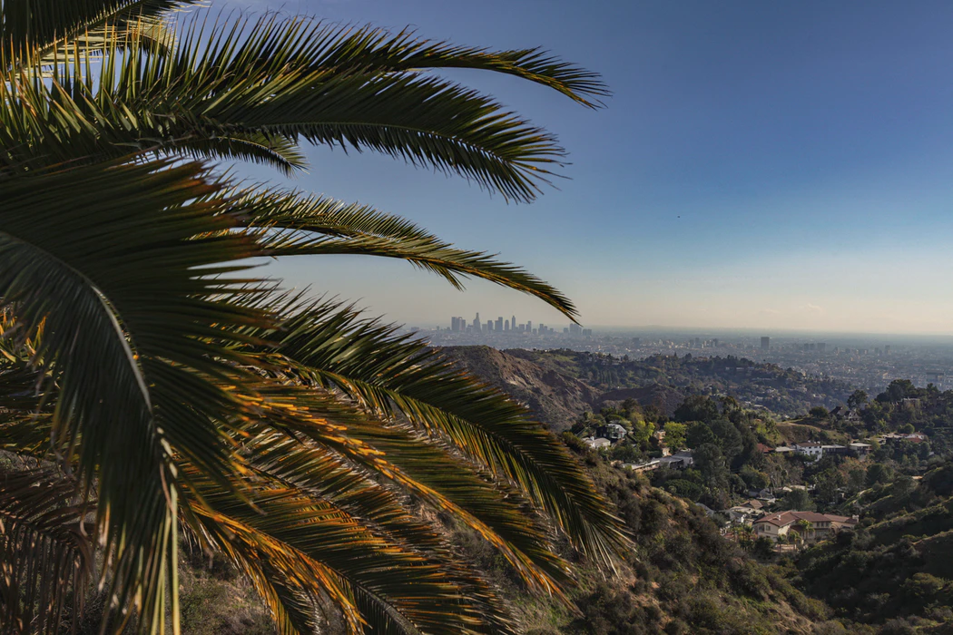 Palm trees overlooking Los Angeles