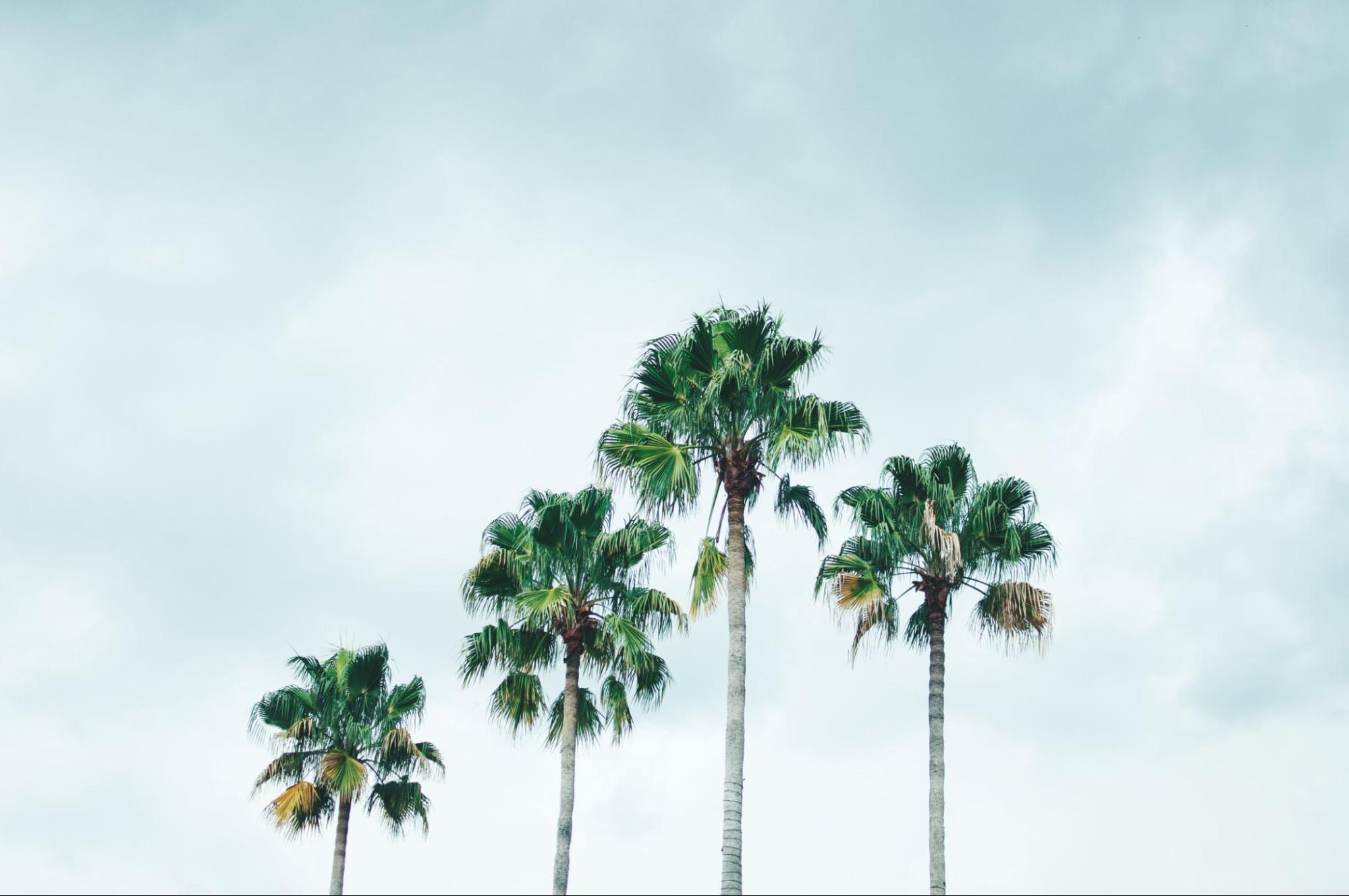 Palm trees in Orlando, Florida