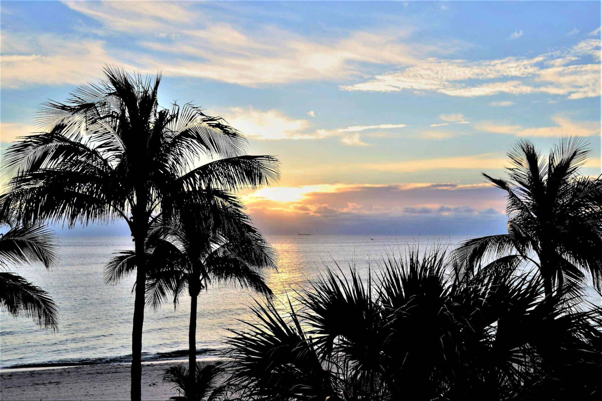 Palm trees in Fort Lauderdale
