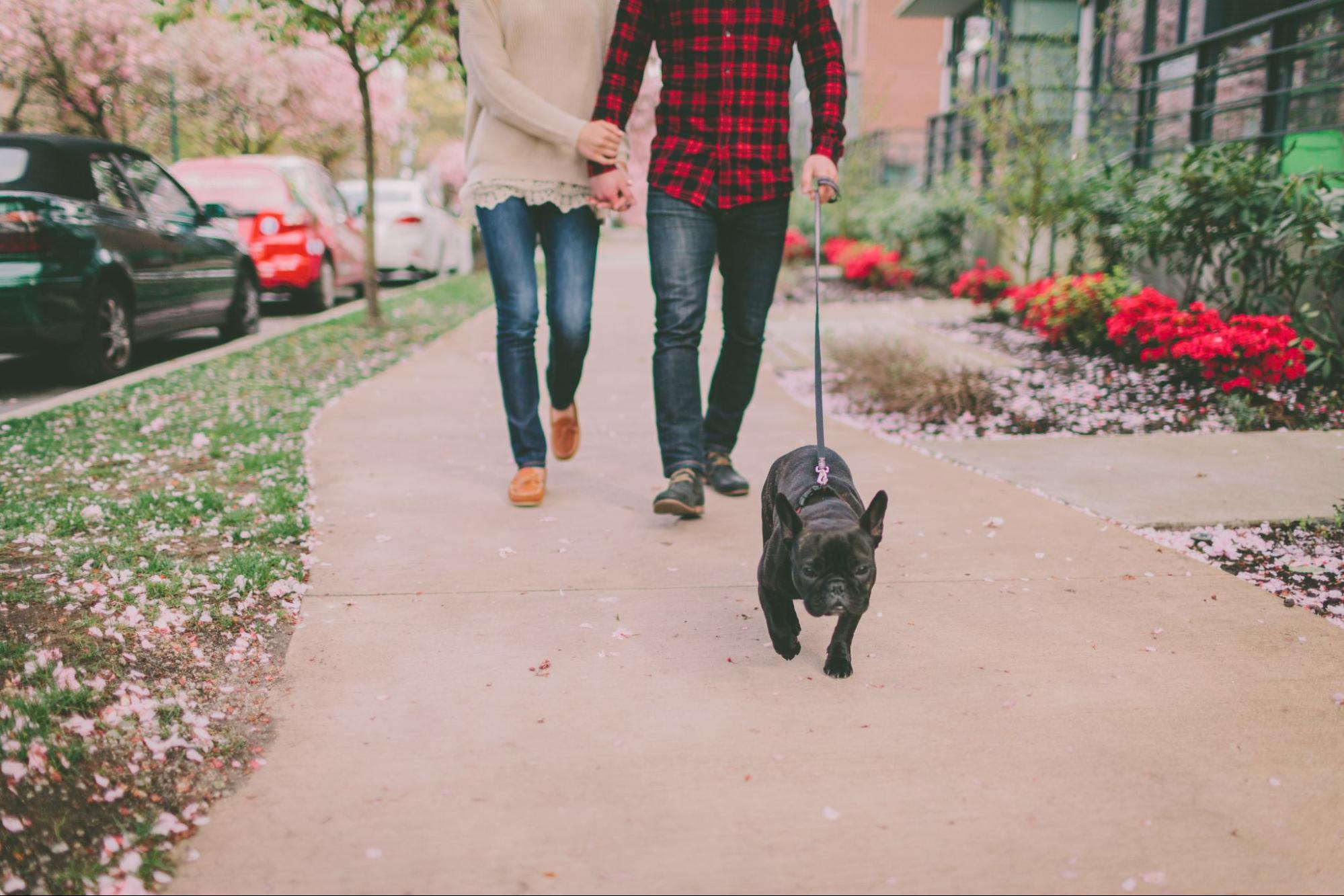 Walking with a dog with Wag!