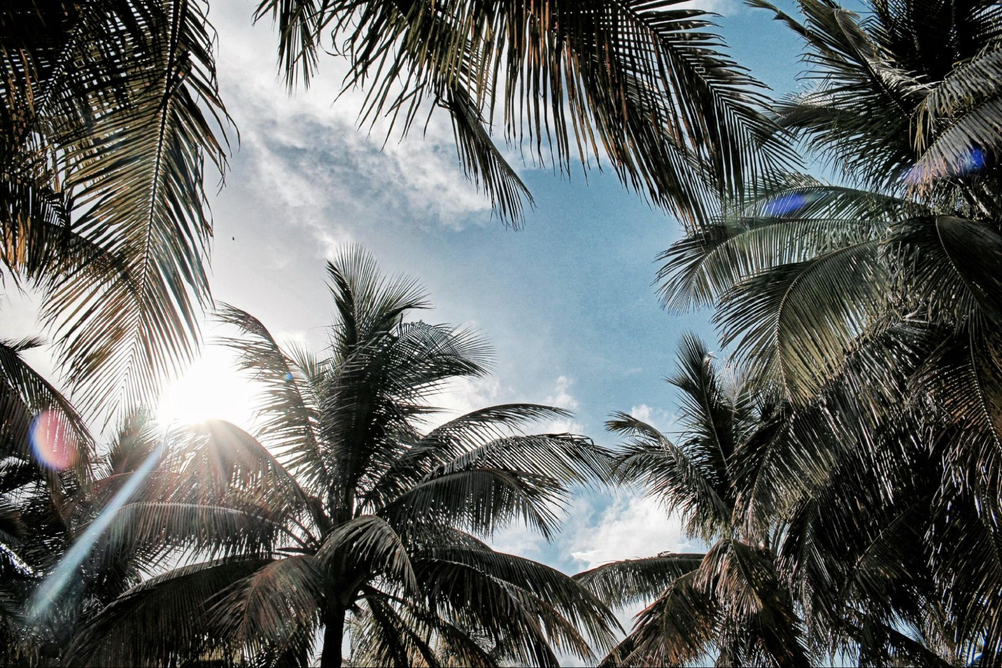 Palm trees in Fort Lauderdale, Florida