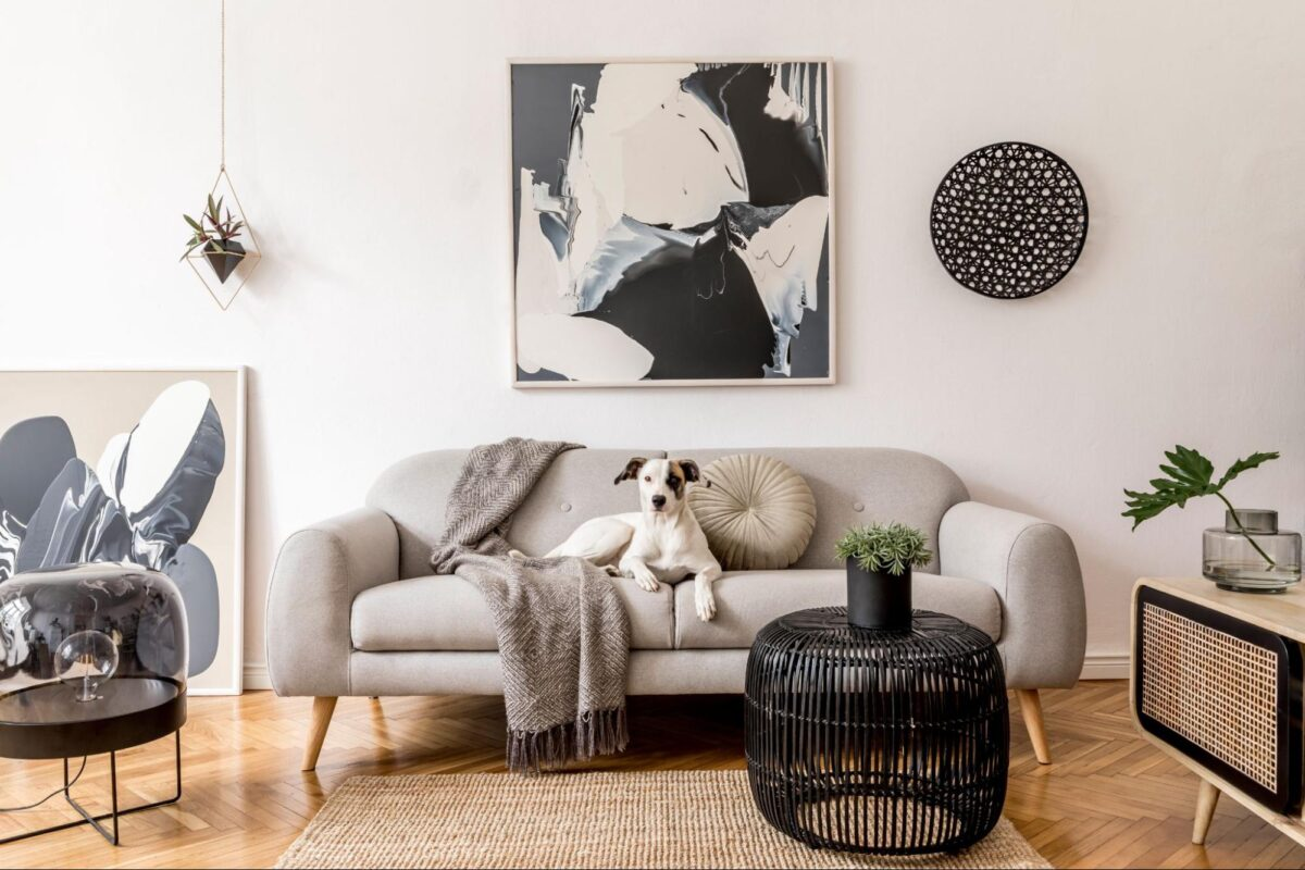 Dog sitting on a sofa in an apartment
