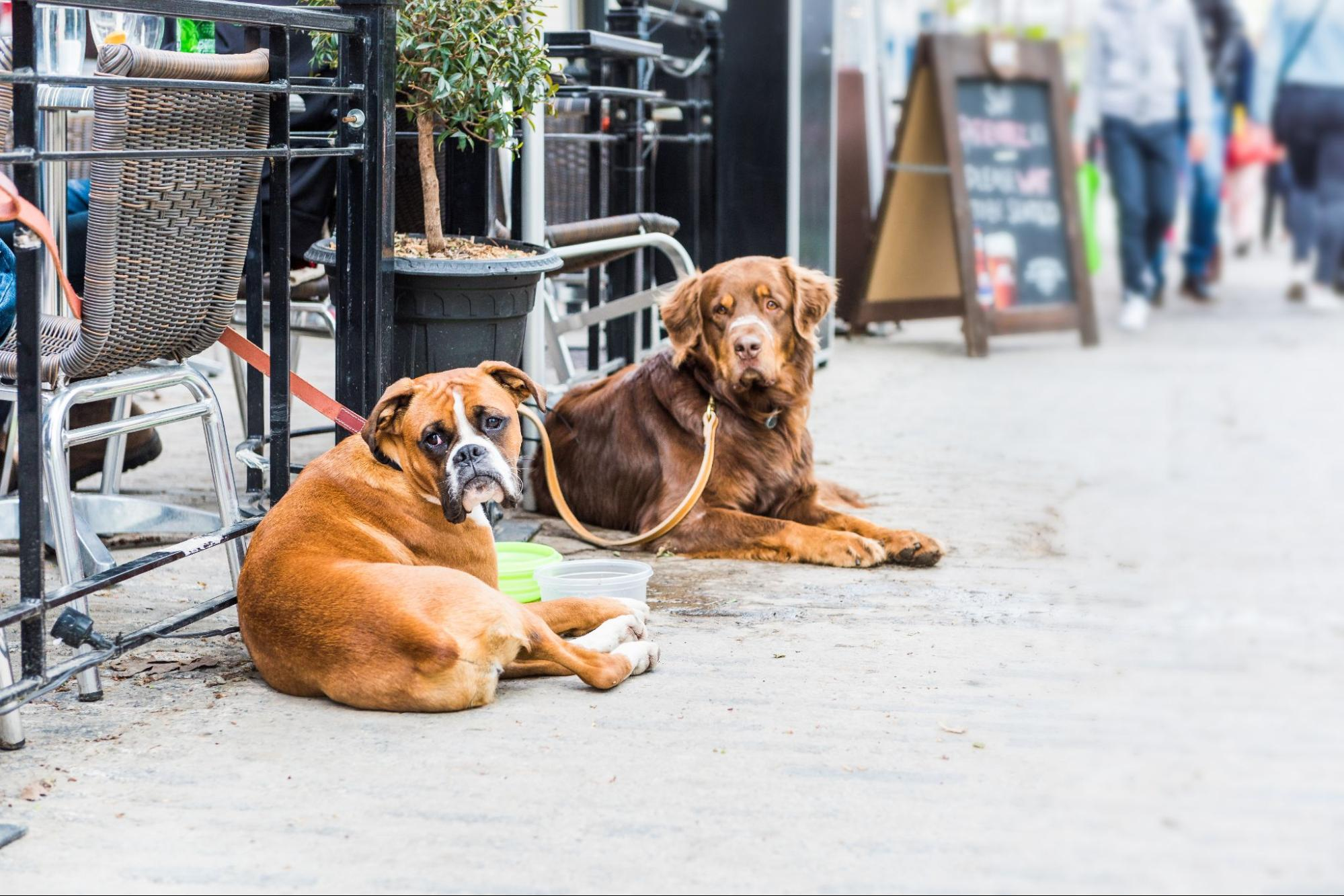 Two dogs sitting outside a dog friendly restaurant in Austin, Texas.
