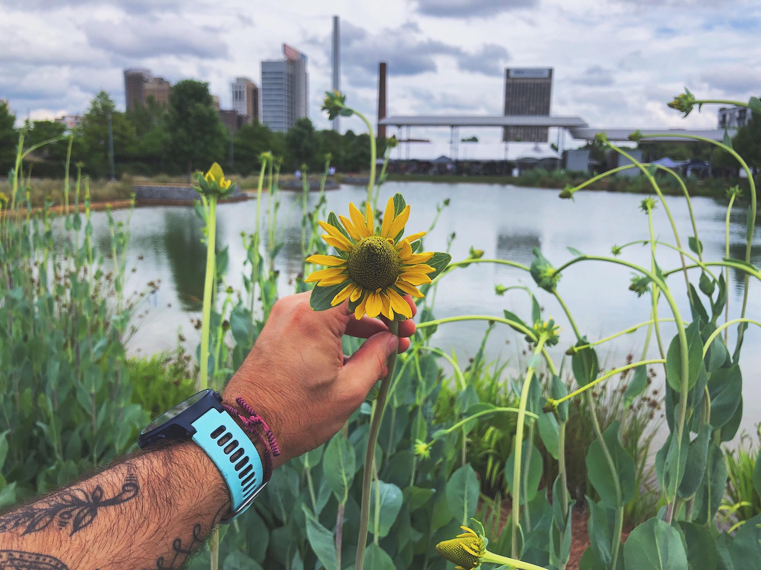 Flowers in railroad park in Birmingham