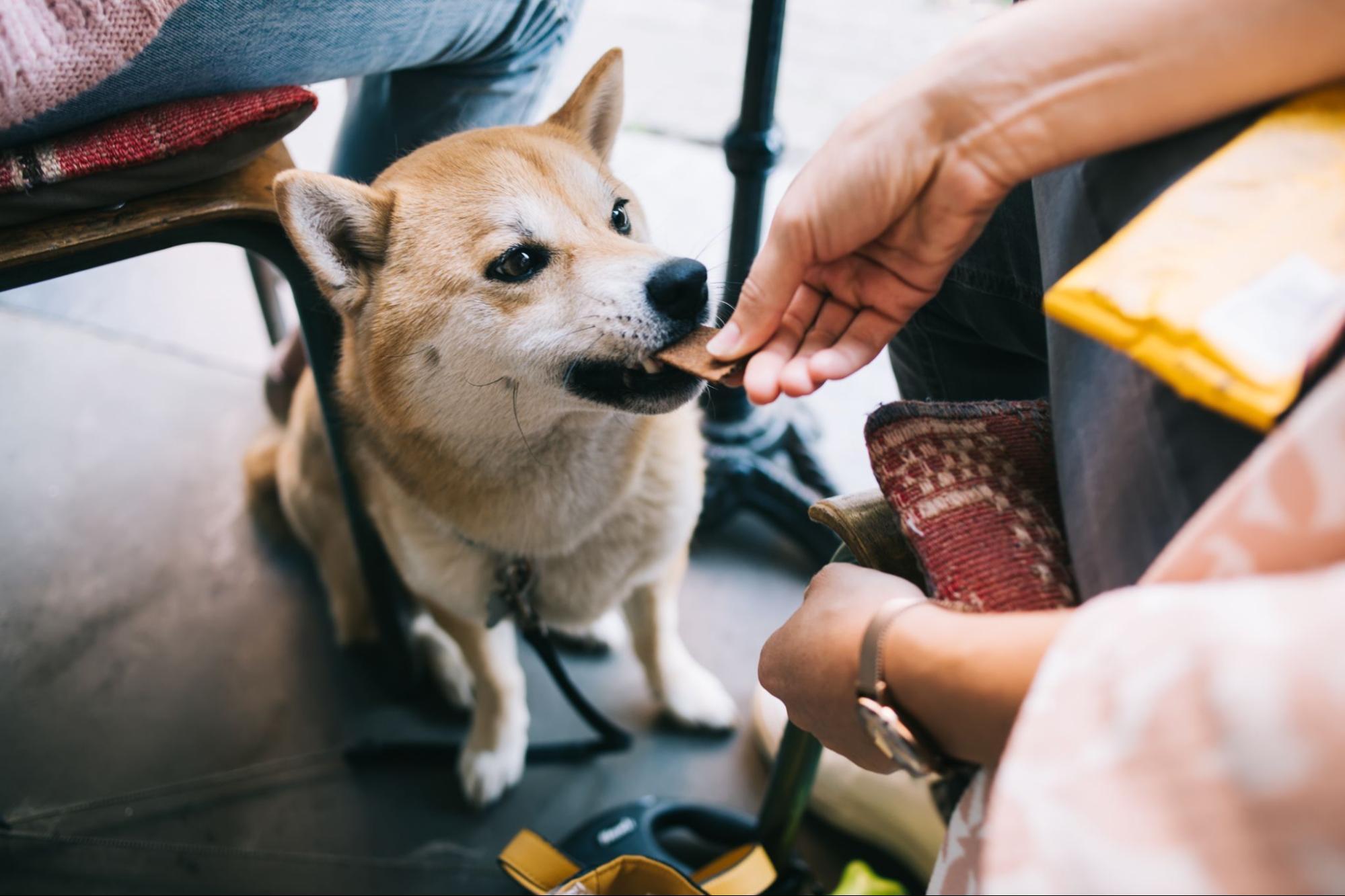 A woman feeding her dog at a dog-friendly restaurant in Nashville.