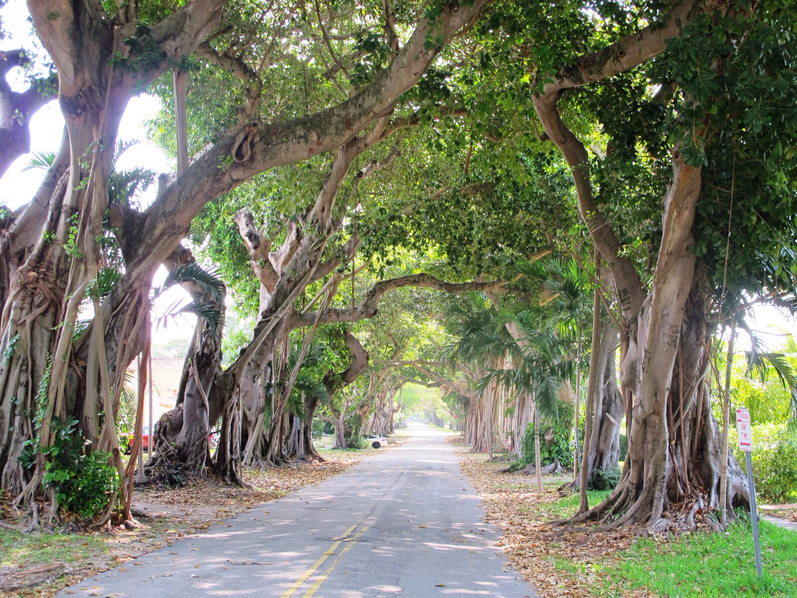A street in Coral Gables, Florida