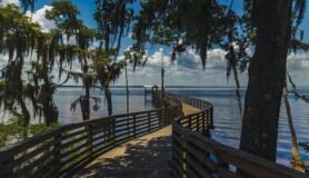 A shot of a dock leading toward the banks of the St. Johns River at Alpine Groves State Park located in Jacksonville, Florida.