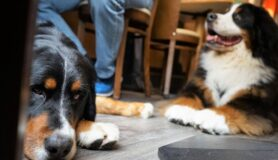 Two dogs sit under the table at a dog-friendly restaurant in Charlotte